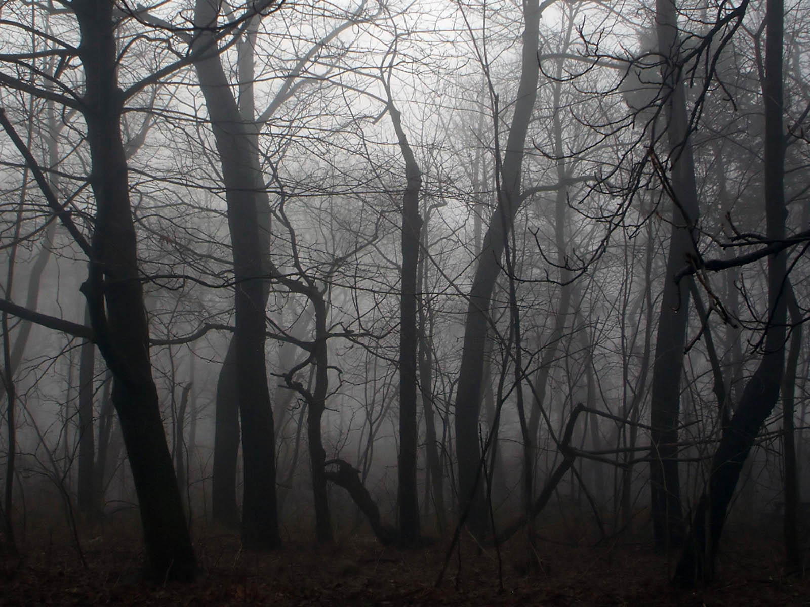 Black And White Gothic Wallpaper Wallpapers Twilight Forest