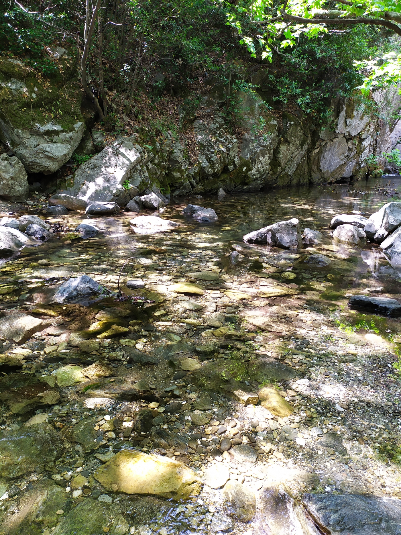 Stream, Spring, Rocks and Forest