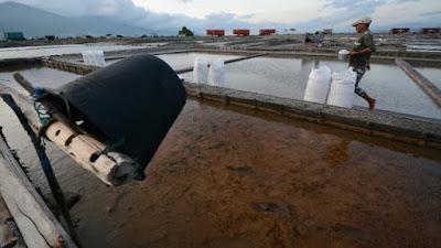 Indonesia Punya Laut Luas, Kenapa Masih Impor Garam?