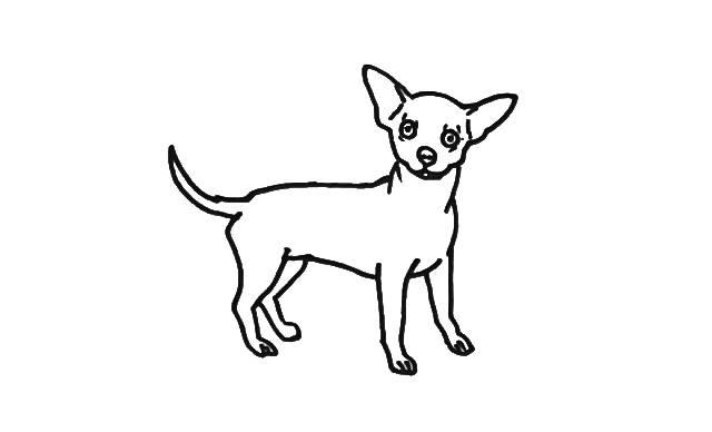 dibujos faciles de perros chihuahua