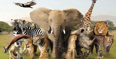 أسماء ذكور الحيوانات وإناثها وصغارها أسماء ذكور الحشرات وإناثها وصغارها
