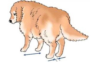 cães e patas traseiras