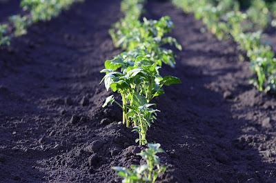 Εαρινές βιολογικές καλλιέργειες