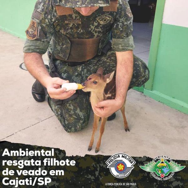Filhote de veado-mateiro é resgatado pela Policia Ambiental em Cajati