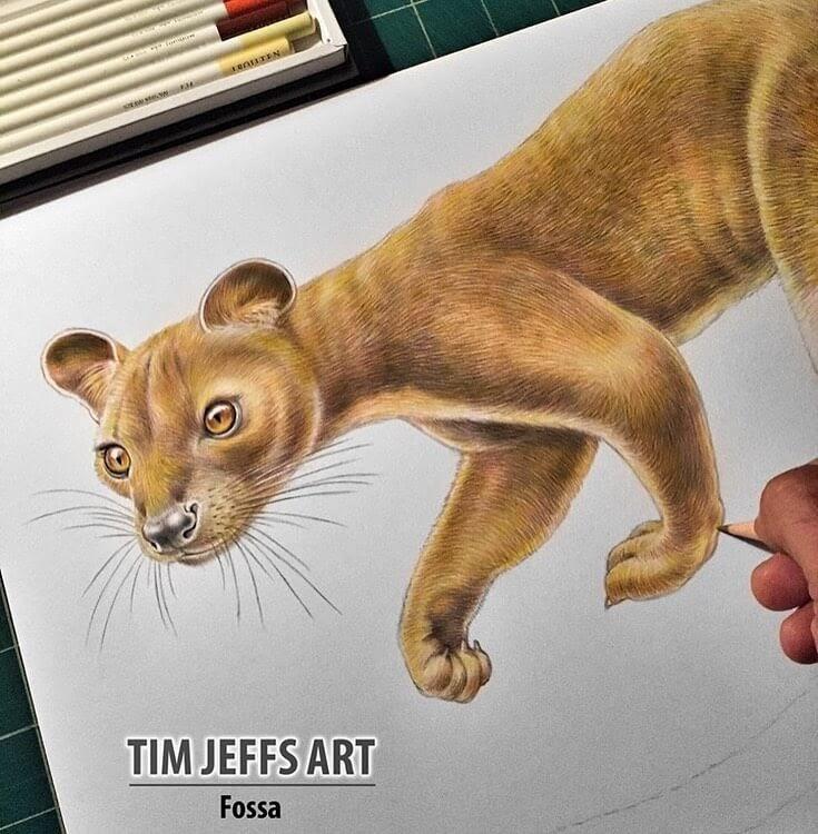 13-Fossa-Tim-Jeffs-www-designstack-co