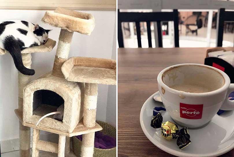 Cat Cafés in Europe