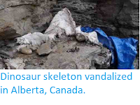 http://sciencythoughts.blogspot.co.uk/2012/07/dinosaur-skeleton-vandalized-in-alberta.html