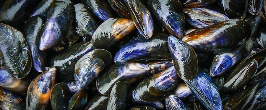 No mussels
