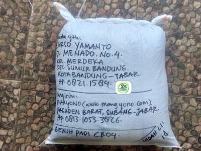 Benih Padi Pesanan  CARSO YAMANTO Bandung, Jabar.   (Setelah di Packing).