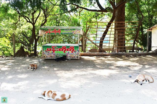 Perros en Myanmar