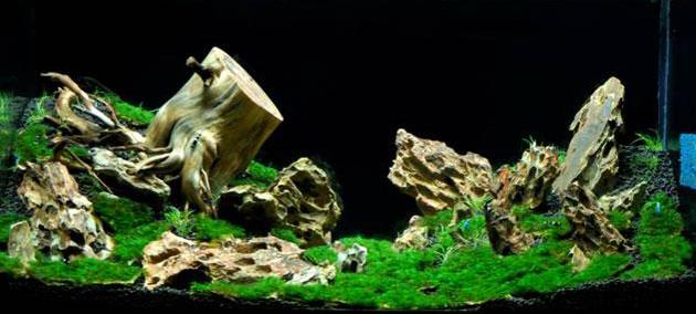 Contoh Gambar Aquascape dan Jenis Tanaman - Alam Ikan