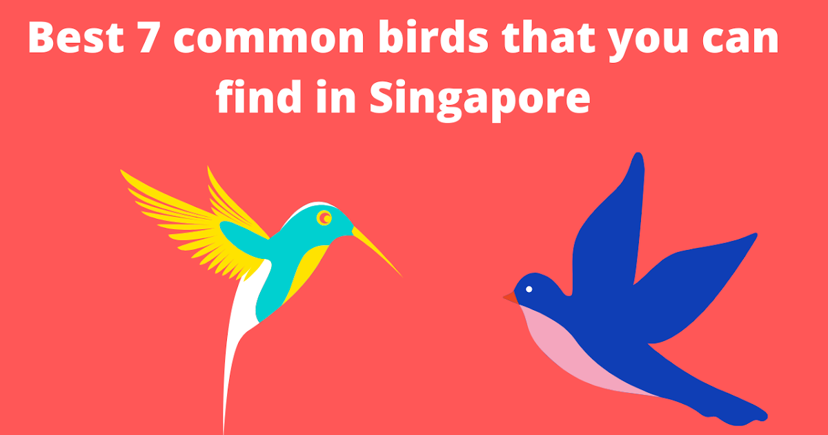 Best Top 7 Most Common Birds That You Can Find In Singapore