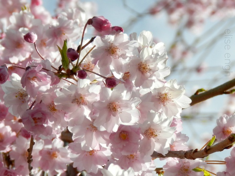 Spring Blossoms Photograph:  Grow Creative