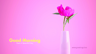Beautiful pink Flowers Good-Morning images