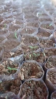 nutrisi, vitamin, cabe rawit dewata 76, cabai, manfaat cabai, budidaya cabe, jual benih cabe, toko pertanian, toko online, lmga agro