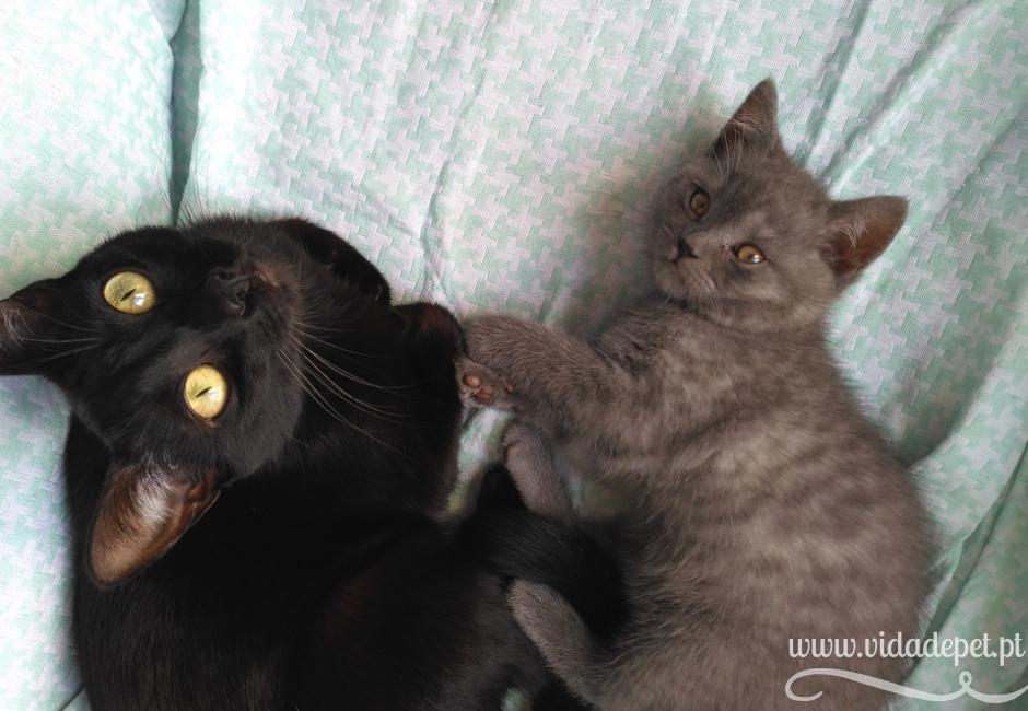 dicas para quem adopta um gato + dicas para adoptar uma gata + vida de pet + blogue de animais de estimação