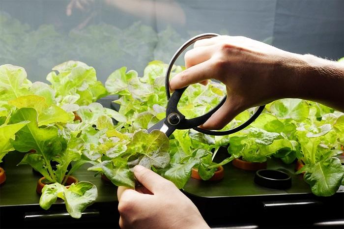 Plant Vegetables House Living Room Farmshelf Hydroponics Indoor Farming