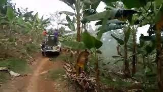 penyiraman pohon pisang