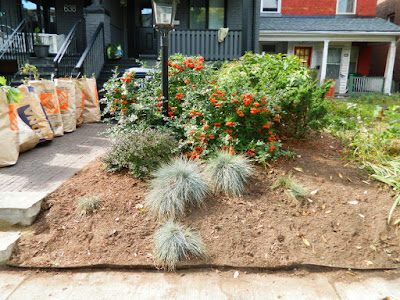 Palmerston Little Italy Front Yard Garden Cleanup after by Paul Jung Gardening Services Toronto