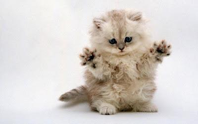 Cute Cats Kitty Pets 00