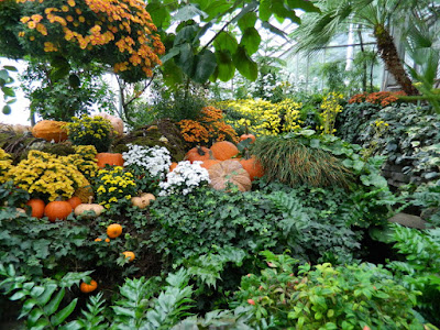Pumpkins and mums at 2016 Allan Gardens Conservatory  Fall Chrysanthemum Show by garden muses-not another Toronto gardening blog