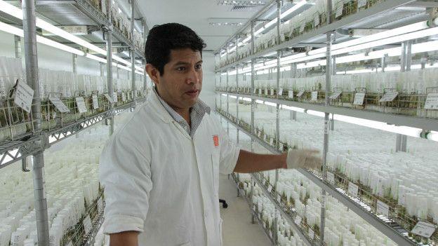 Los laboratorios del CIP guardan más de 4.000 variedades de papa.