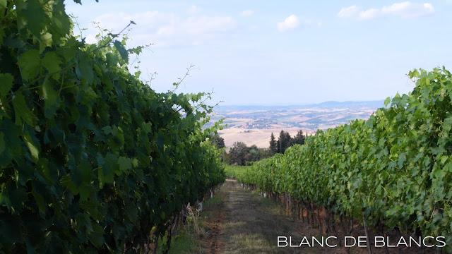 Viinitila Toscanassa - www.blancdeblancs.fi