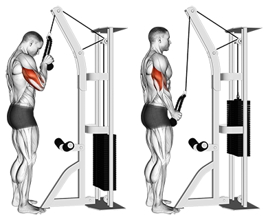 triceps exersices