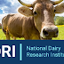 SRF Recruitment in National Dairy Research Institute