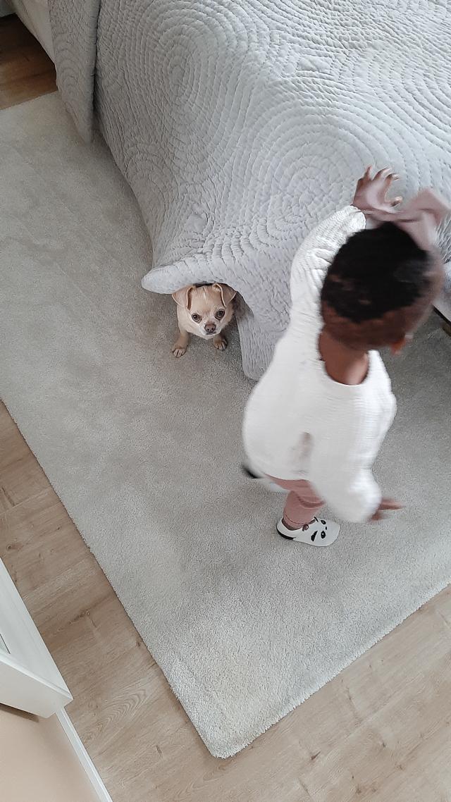 Villa H, lasten tyyli, koira, chihuahua