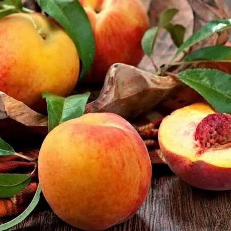 Bibit Buah Persik Peach Banten