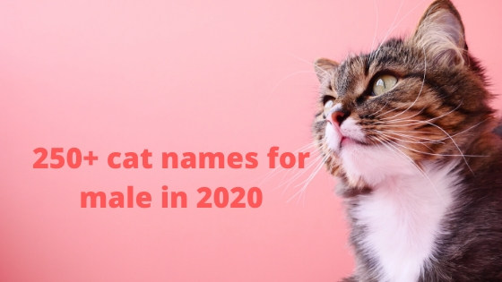 250+ cat names for male in 2020