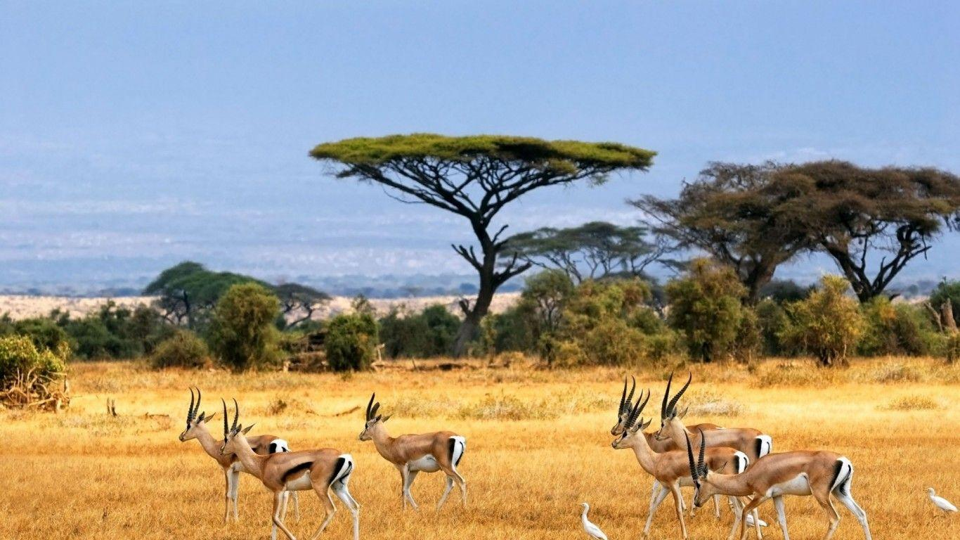 africa Nature HD Wallpapers