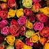 Τριαντάφυλλα και αριθμοί