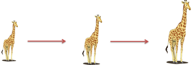 Adaptation and acclimatisation, neck lengthening in giraffe, adaptation is long process