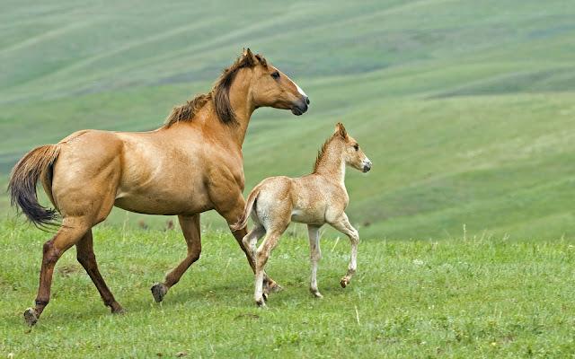 Bruin paard met veulen in het weiland