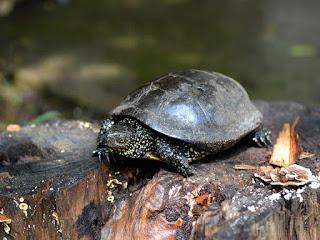 habitat-kura-kura.jpg