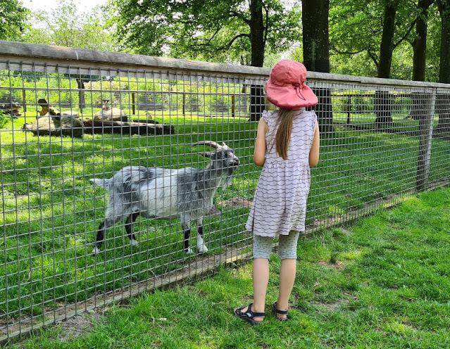Drei geniale Rast- und Spielplätze auf der Fahrt in den Dänemark-Urlaub nahe der Autobahnen E45 und E20. Ein Gehege mit Ziegen im Trollpark Vejen war die Attraktion für unsere Kinder am Wegesrand unserer Reise in die Sommerferien.