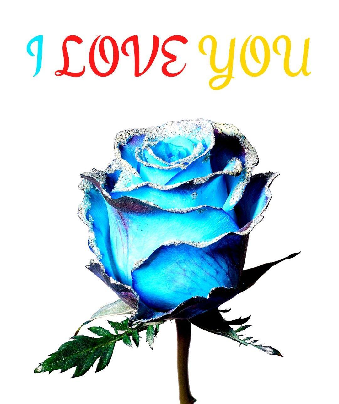 I Love You Blue Rose