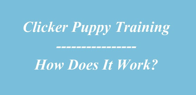 Clicker Puppy Training