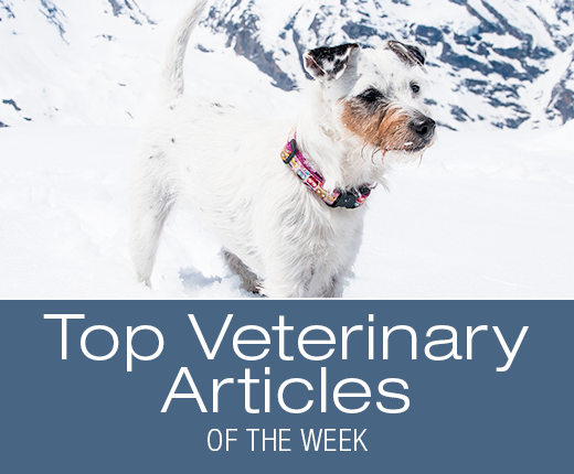 Top Veterinary Articles of the Week: CBD Oil and Dog Cancer, and more ...