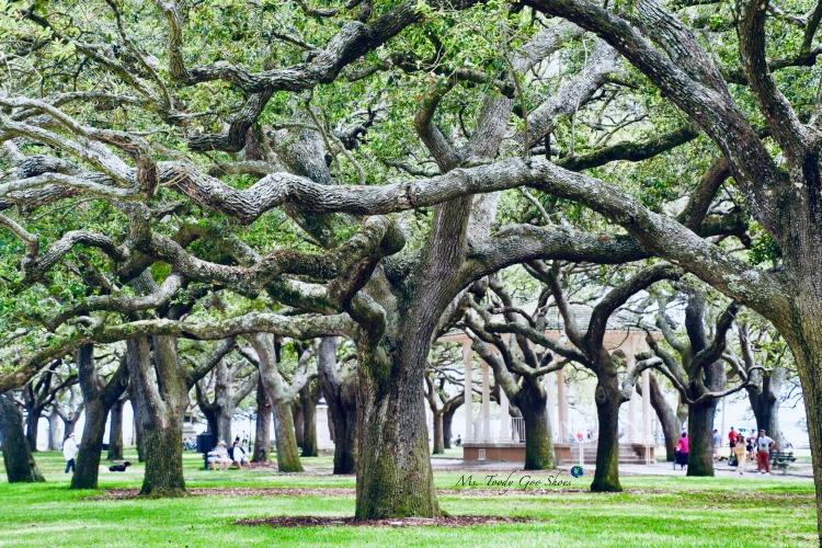 10 Things To Do In Charleston: #7 - Rest your feet in White Point Gardens | Ms. Toody Goo Shoes #Charleston