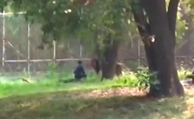 दिल्ली के चिड़ियाघर में शेर के बाड़े में घुस गया शख्स, सहलाने लगा जंगल के राजा के बाल, देखें वीडियो