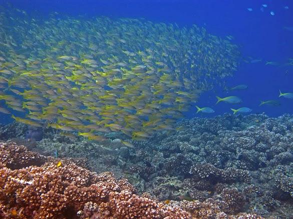 Melakukan Scuba Diving Menyelam Sekitar Singapore Malaysia Pulau Cantik Eksplor Destinasi Wisata Bahari Serta Penggila Snorkeling