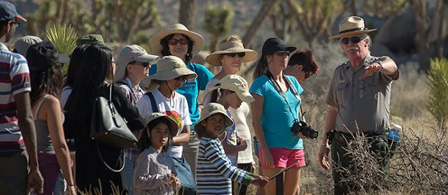 O que ver no Parque Nacional de Joshua Tree na Califórnia