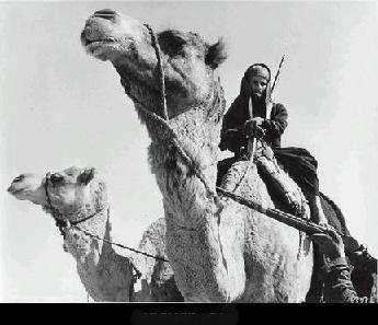 Maryoom المواصلات قديماو حديثا في الاماراات