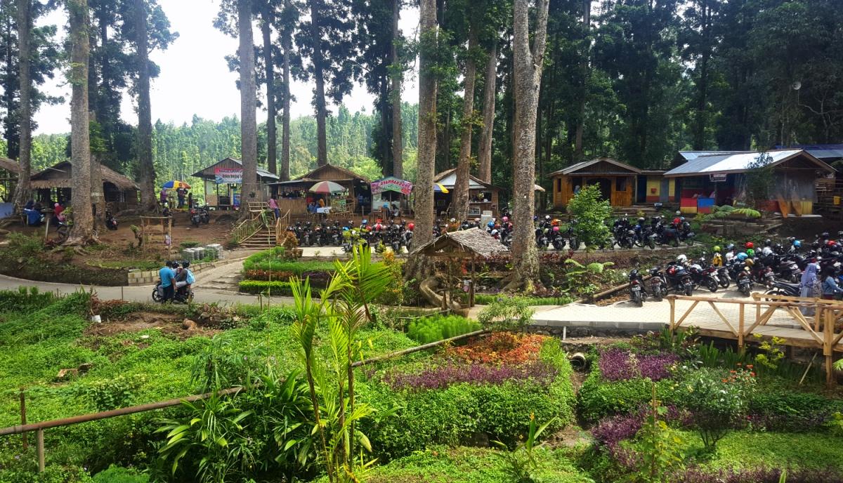 [CoC Regional: Lokasi Wisata] Asal-Usul dan Cerita Mistis Hutan Pinus Limpakuwus