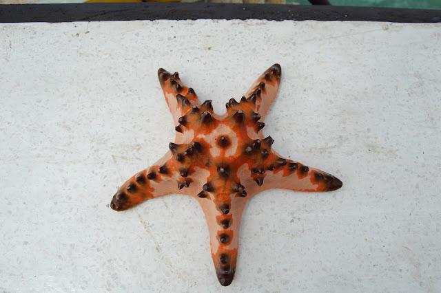 Морская звезда на острове Самал, Филиппины