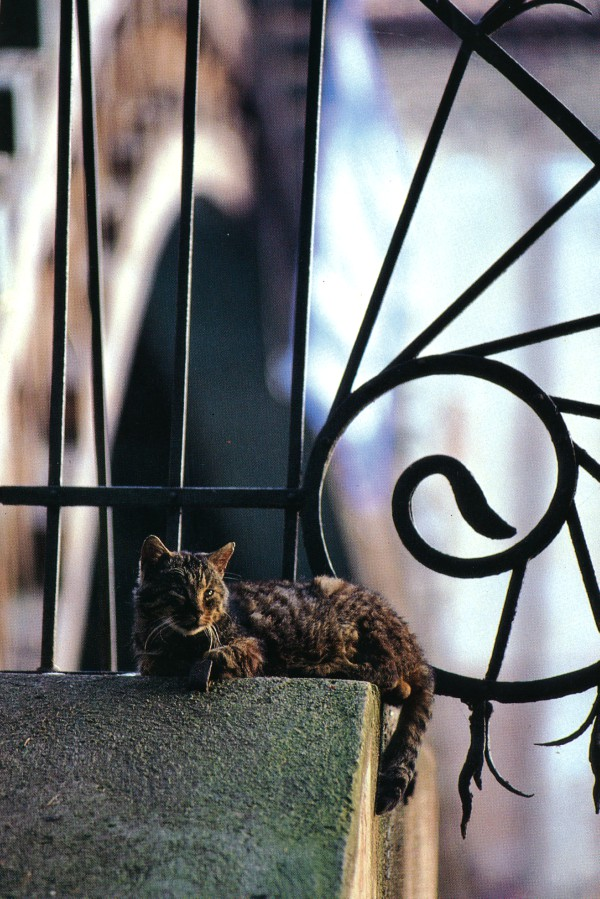 Cats of Torcello, Italy