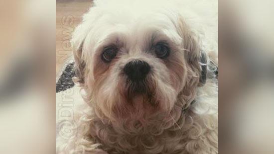 cachorro indenizacao pet shop fisicos psicologicos
